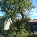 Wildwood Trees